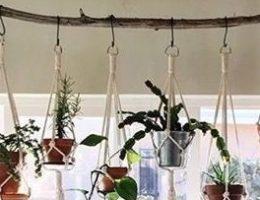 depa-desoltera-plantas