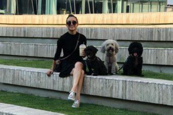 Mi vida con perros