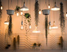 depa-de-soltera-plantas