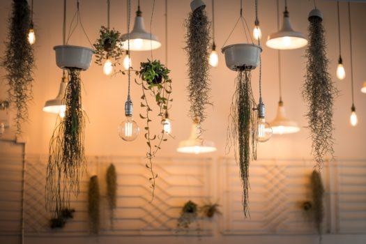 Las 5 Plantas colgantes más lindas para tu depa