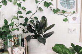 Me convertí en la señora de las plantas…